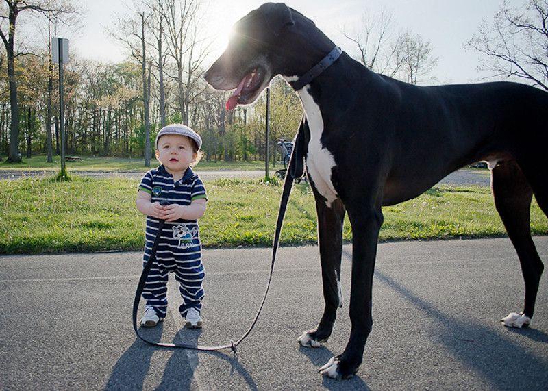 15 hunde die wie geschwister für kinder sind  hunde und