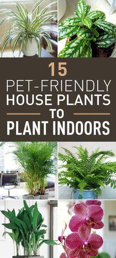 15 Top Pet-Friendly Houseplants You Can Plant Indoors #plantsindoor