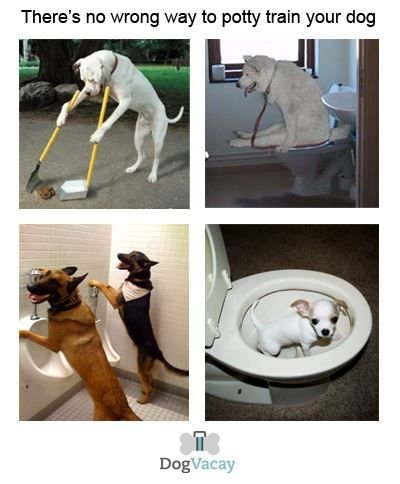 There S No Wrong Way To Potty Train Your Dog Funny Dog Dogs
