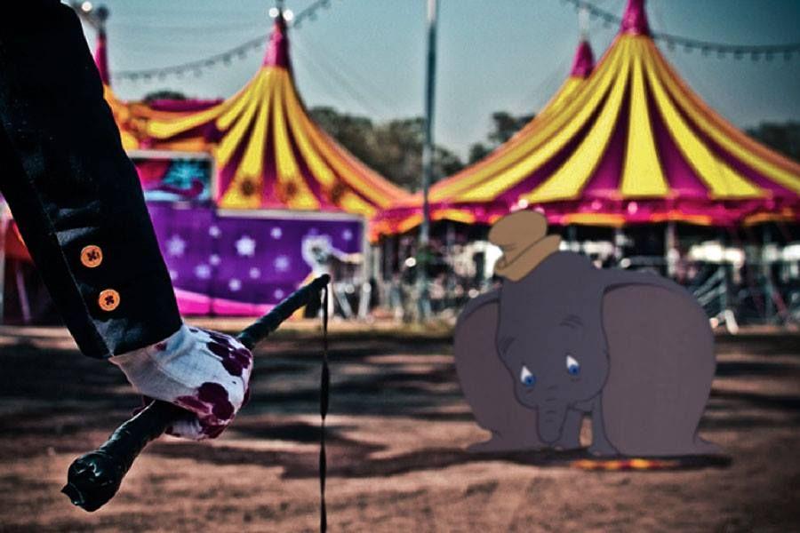 Circos+animales
