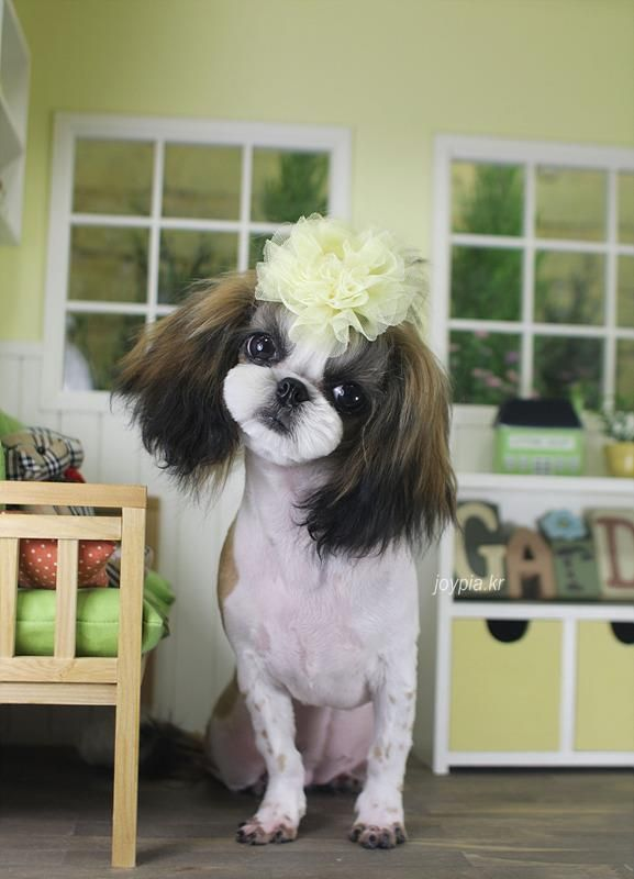 Dog's Life Grooming are a professional and friendly dog grooming service. We are based in Rossall, near Fleetwood, Lancashire. Our dog grooming offers a complete range of services for your furry companion. http://dogslifegrooming.com