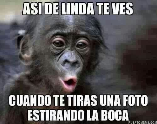 Funny Monkey Meme In Spanish : Pin by yanet💫 on spanish memes humor memes and