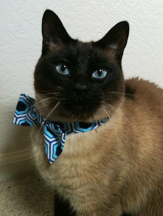 Cat and Bow Tie...looks my kitties!