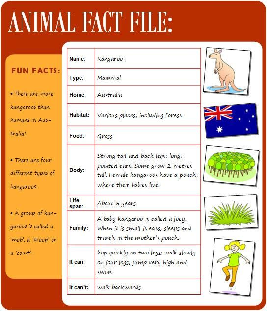 Animal Fact File Animal Fact File Animal Facts Animal Facts For Kids