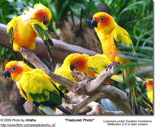 Sun Conures What Could Be More Beautiful Birds Parrot Sun Conure