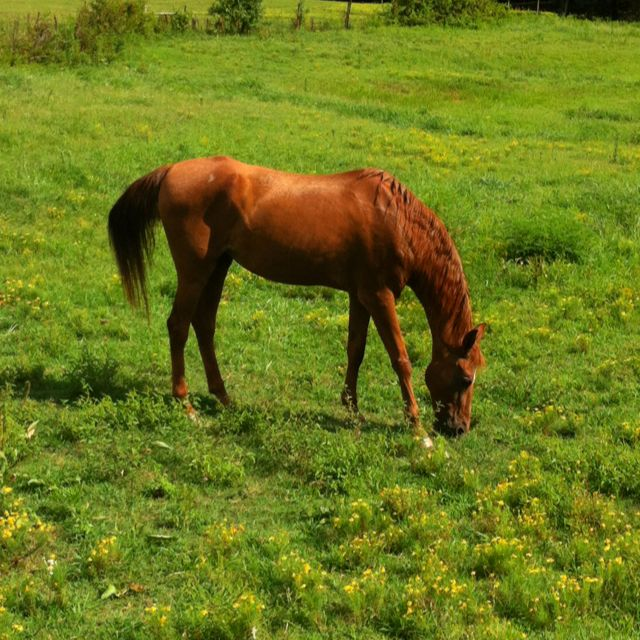 My horse. Sweet Lady Beth<3