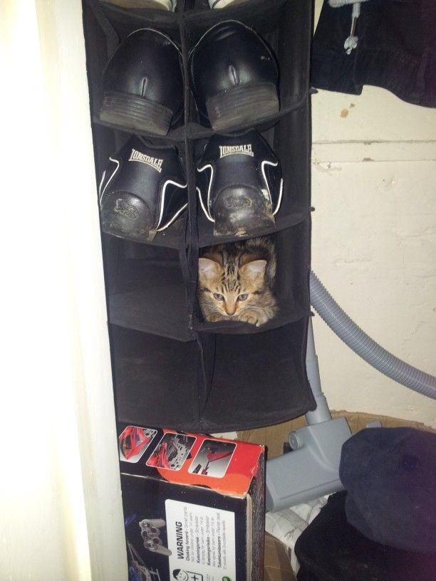 Spot the kitten lol :D