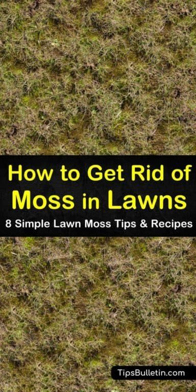 a0fd091c1954c5671aadc0d2214fd8c3 - How To Get Rid Of Moss In Grass Naturally