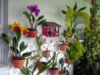 Terra Cotta Pots On Patio Wall Hang Orchids On Walls Hanging Flower Pots Flower Pole Flower Pot Design