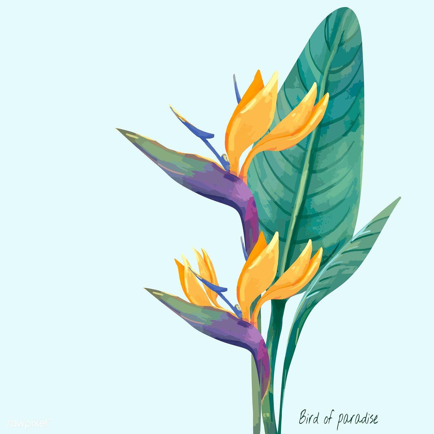 Hand Drawn Bird Of Paradise Flower Premium Image By Rawpixel Com Birds Of Paradise Flower Birds Of Paradise Plant Birds Of Paradise