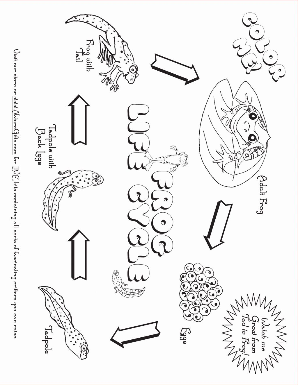 Frog Coloring Pages for Preschoolers New Coloring Book