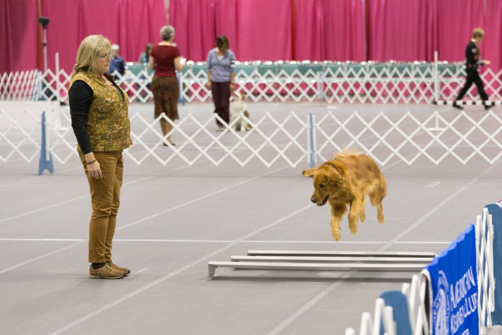 How To Watch A Dog Obedience Competition Good Manners Are Fun