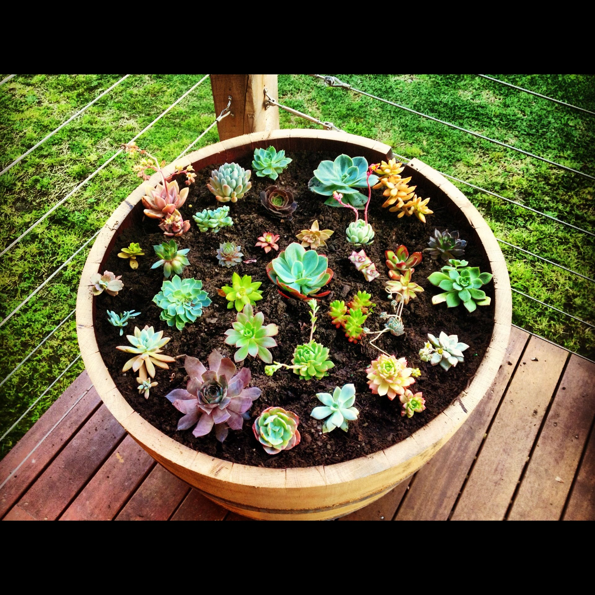 Succulent Garden In A Wine Barrel Could Also Do A Batch