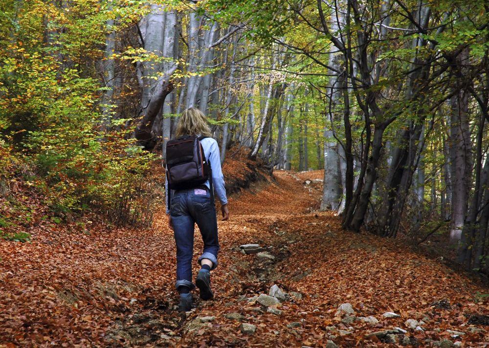 Forêt de l'abbaye Val notre Dame