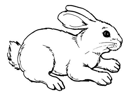 Dibujos de Conejos para Colorear e Imprimir | noviembre | Cute