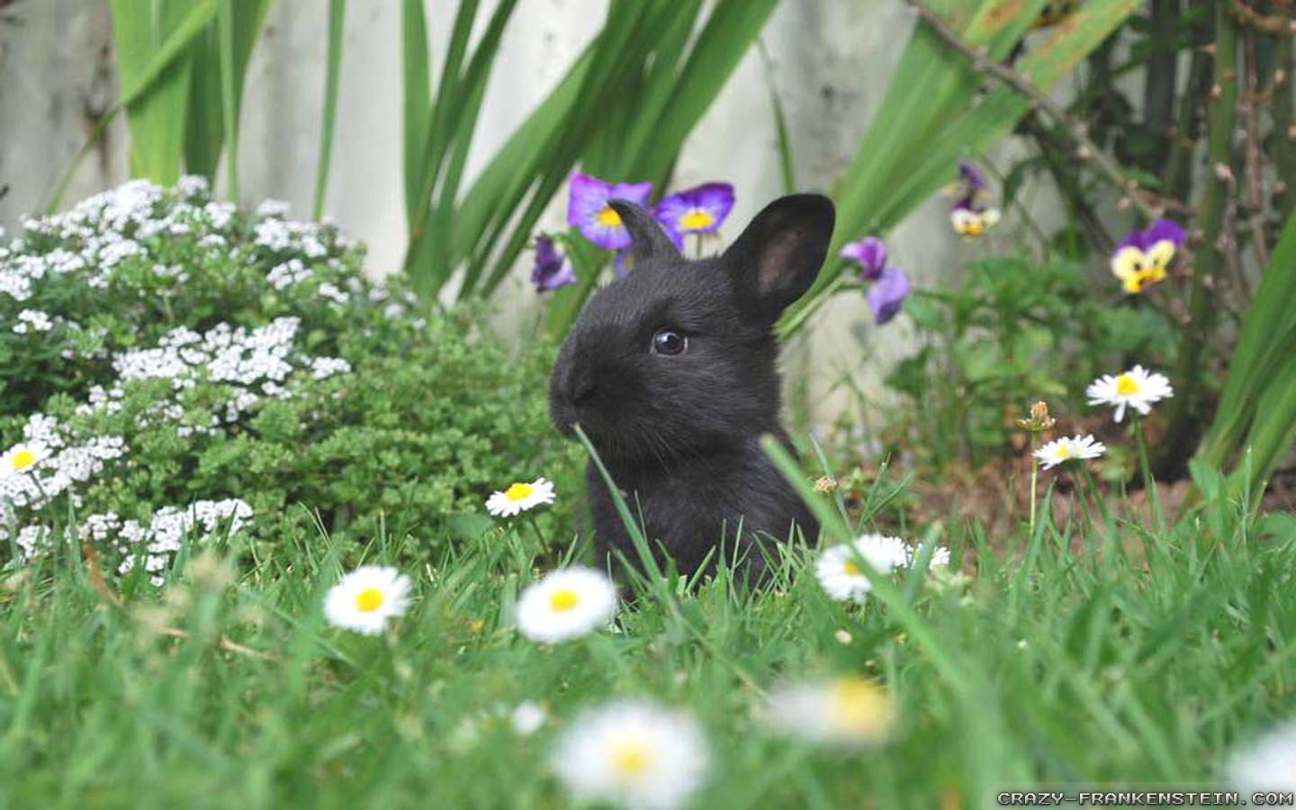 Free Spring Animal Wallpaper 3d Wallpapers Pinterest