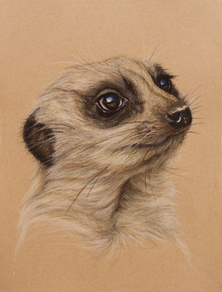Meerkat by Wendy Beresford on Strathmore Toned Tan