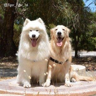 Pin Em Minha Paixao Cachorros