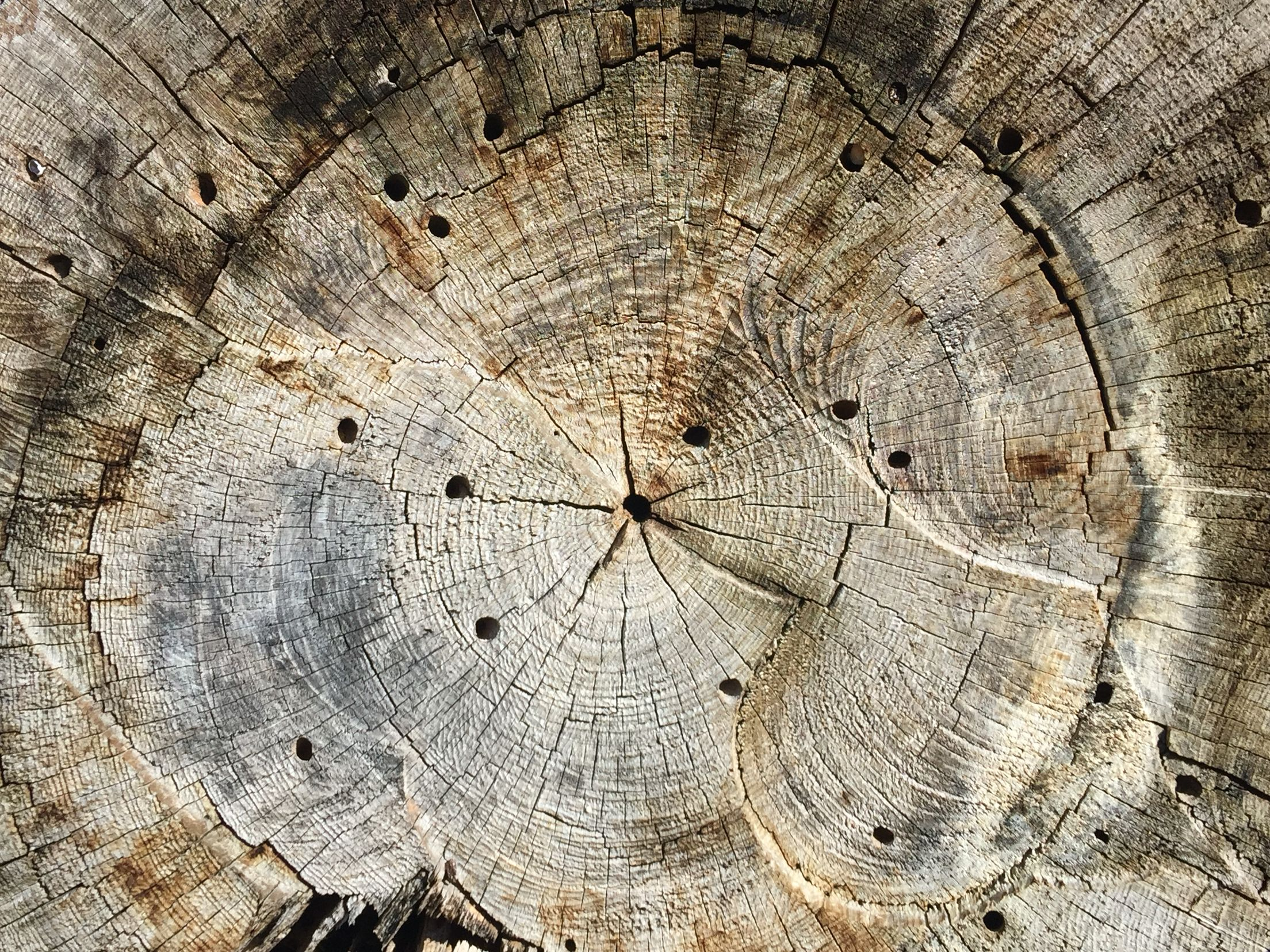 Dissection Of Tree Trunk Rings Of Time