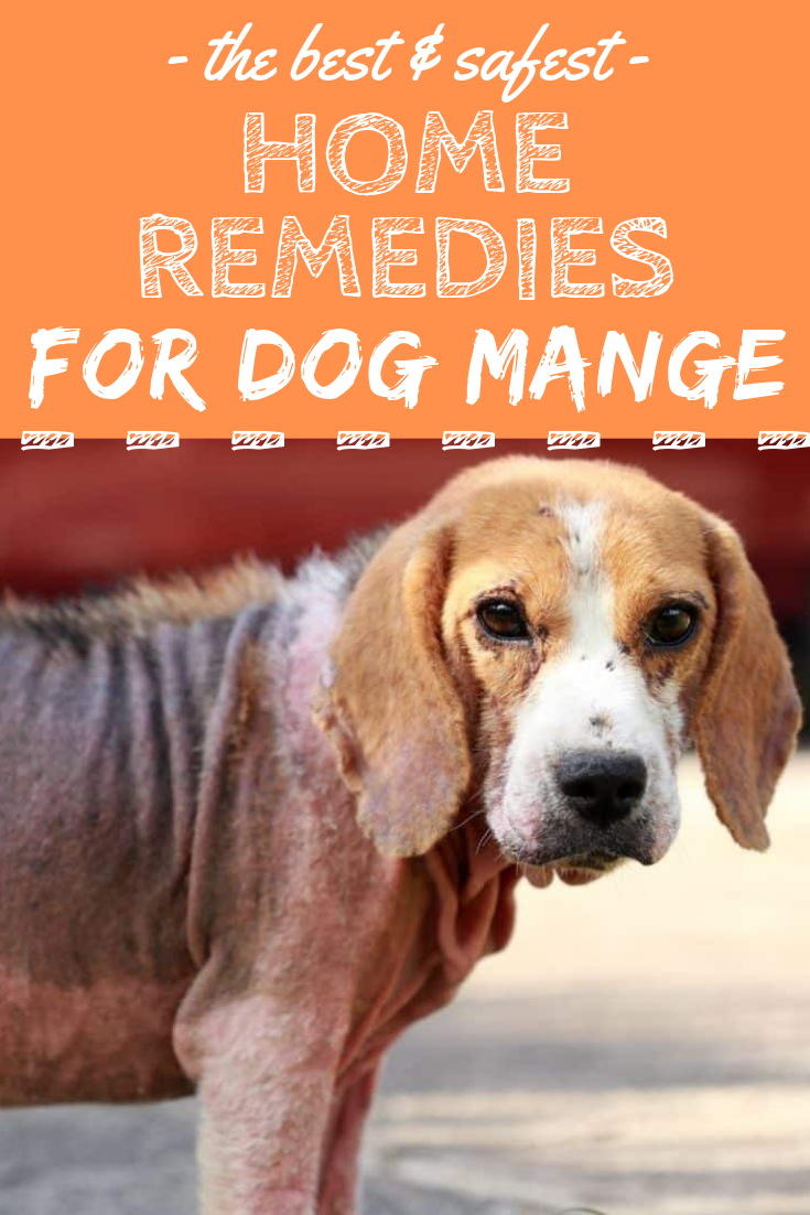 Learn How To Treat Dog Mange Safely And Effectively With Home Remedies Mange Dogs Dogcare Dog Treatment Dog Mange Demodex Treatment Dogs