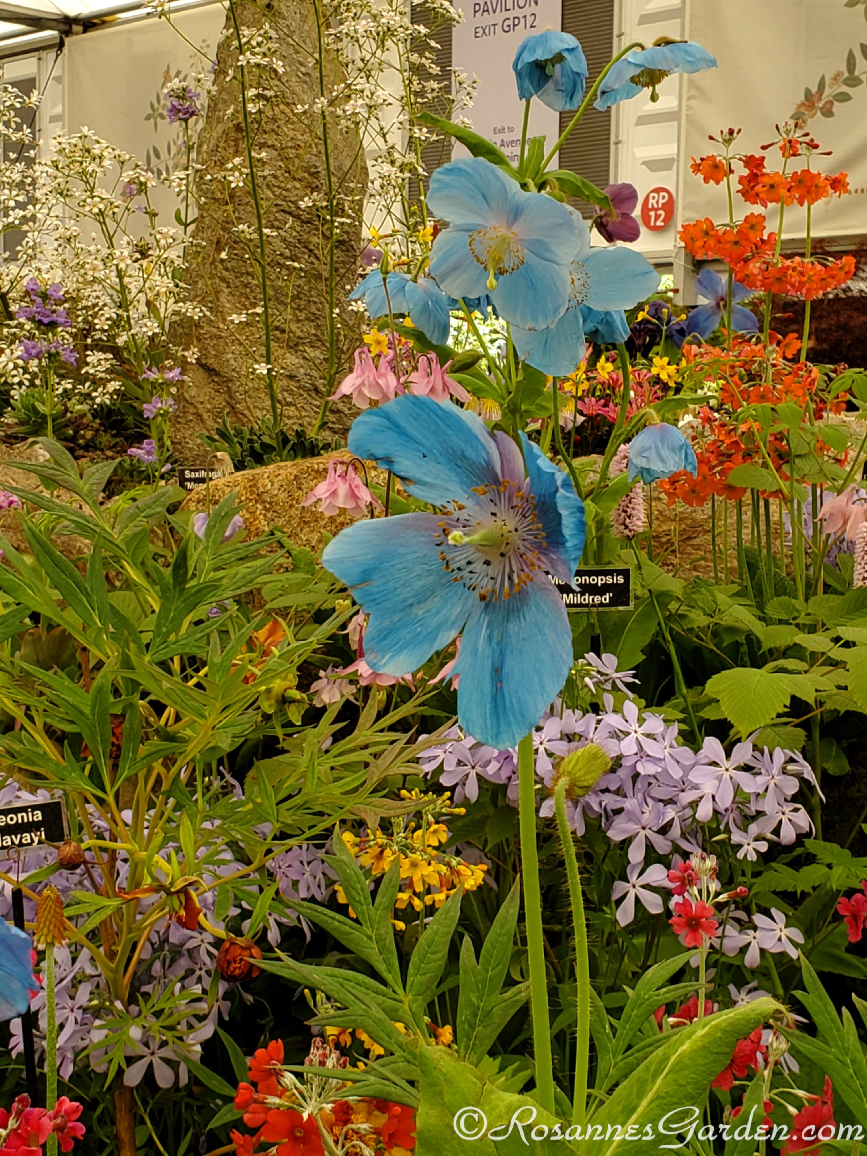 The 2019 Chelsea Flower Show A Treat For The Senses Flower Show