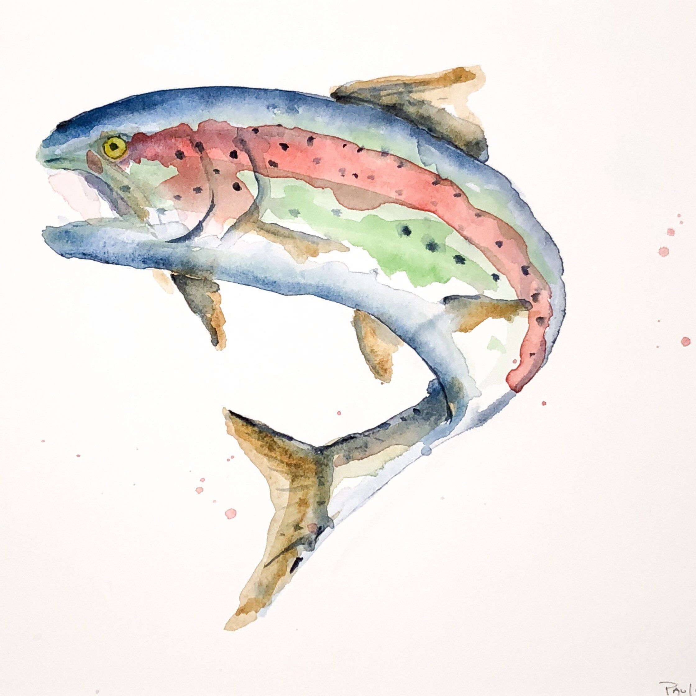 Watercolour Trout Watercolor Fly Fishing Art Fly Fishing