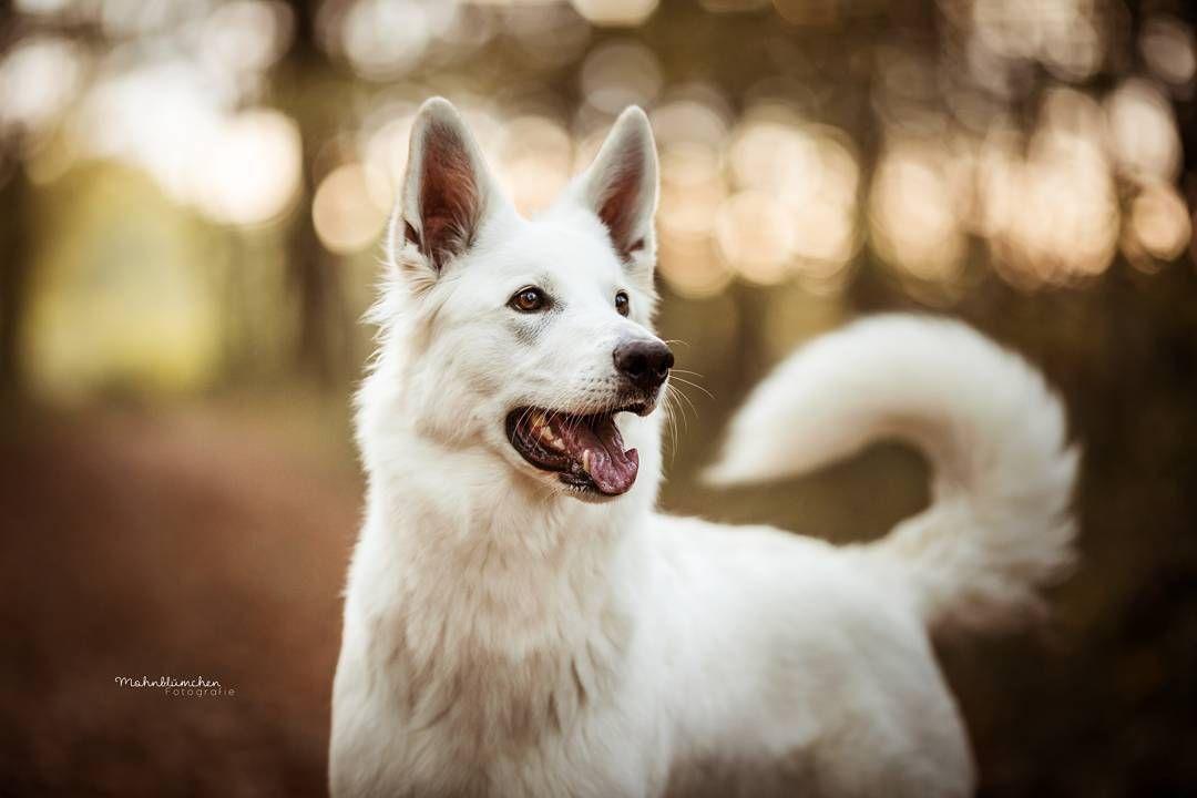 Endlich Kann Ich Euch Ein Paar Bilder Von Den Weihnachtsshootings Zeigen Die Te In 2020 Tierfotografie Hunde Fotos Tiere