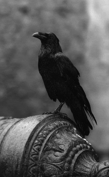 Crow Symbolism Death