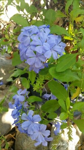 Pin By Yujin Jung On Flowers Plants Garden Flowers