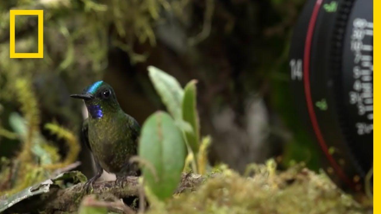 Filming Fast Hummingbirds On Location Hostile