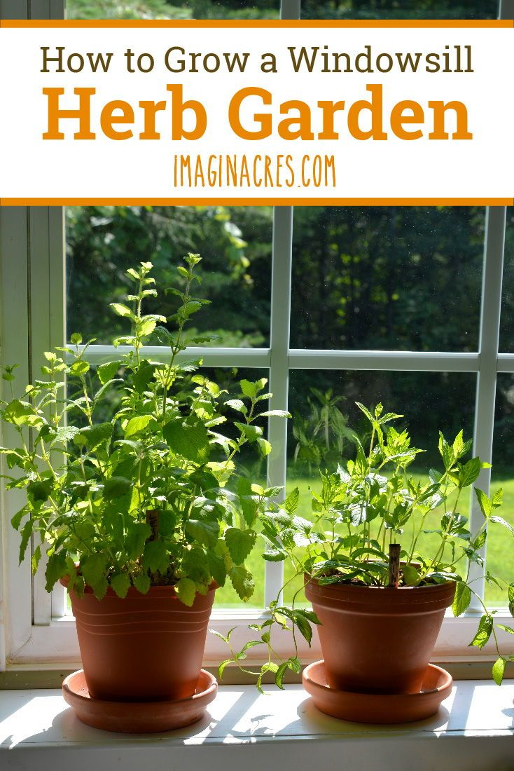 How to Grow a Windowsill Herb Garden is part of Herb garden, Herbs indoors, Herb garden design, Diy herb garden, Indoor herb garden, Herbs - Most herbs are easier to care for than houseplants, and they provide fresh foliage to flavor meals  Learn how to grow an indoor windowsill herb garden and enjoy herbs whenever you need them