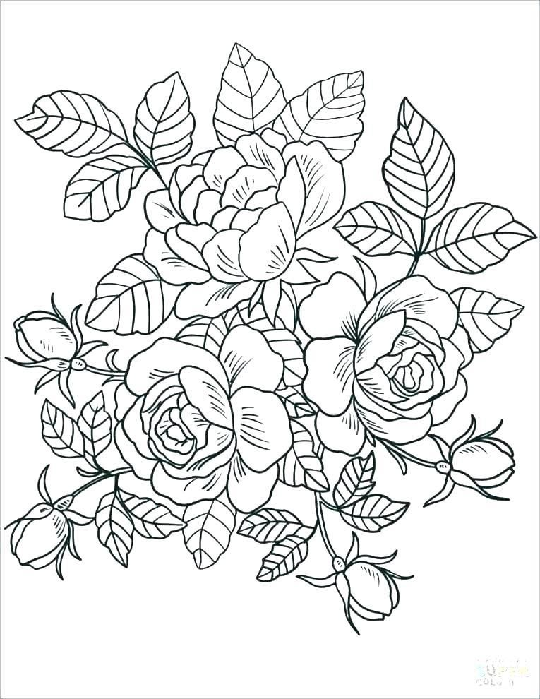Spring Flower Coloring Pages Detailed Coloring Pages Rose Coloring Pages Printable Flower Coloring Pages