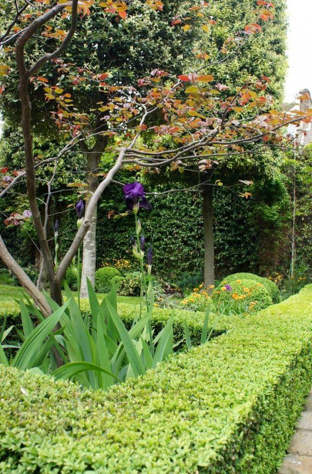 sichtschutz hecken arten garten pflege wachsen baum | g- sträucher, Garten ideen