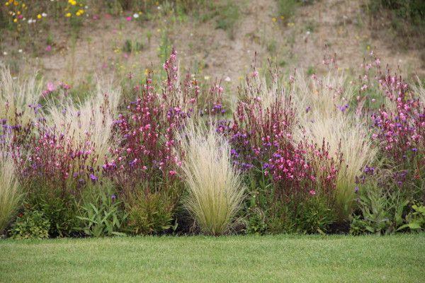 Ziergraser Pflanzen Garten Gras