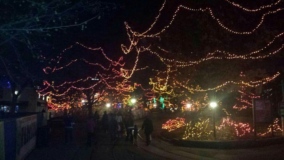 I Love Color Indianapolis Zoo Christmas Time My Love