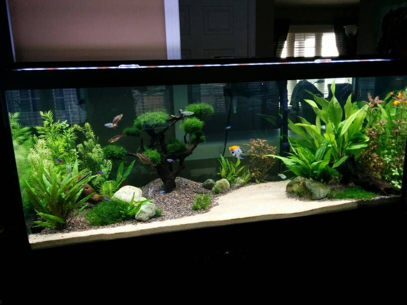 Img Tropical Fish Tanks Planted Aquarium Aquarium Fish Tank