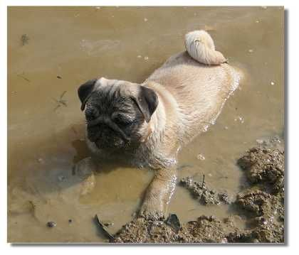 Now There S A Noodle For Ya Wallowing In Mud No No No