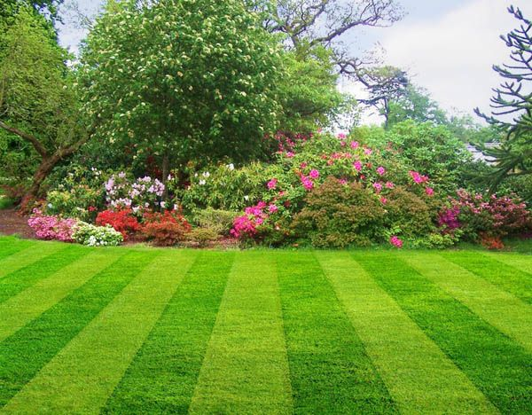 Good Lawn Mowing Practices is part of Perfect lawn Lines - Good Lawn Mowing Practices  Mowing height and when to mow are among the considerations addressed