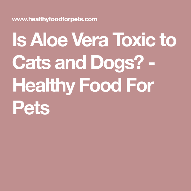 Is Aloe Vera Toxic To Cats And Dogs