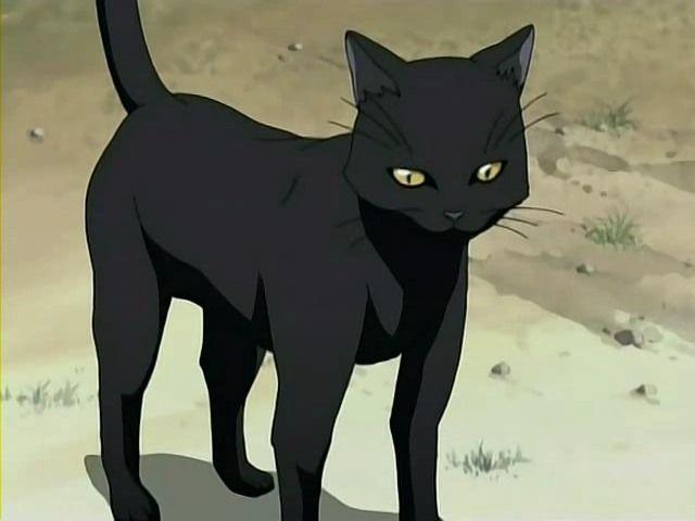 yoruichi gato