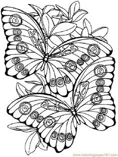 image result for coloring flowers butterflies dragonflies coloring