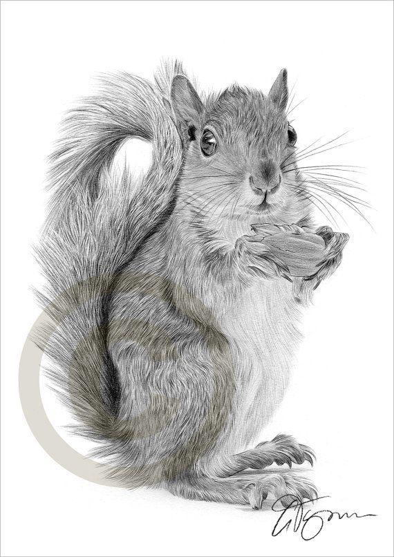 Red Squirrel pencil drawing print wildlife art artwork