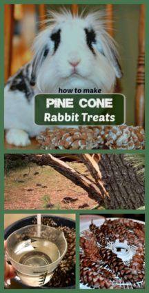 Pine Cone Rabbit Treats Keep Bunnies Active Rabbit Treats Pet