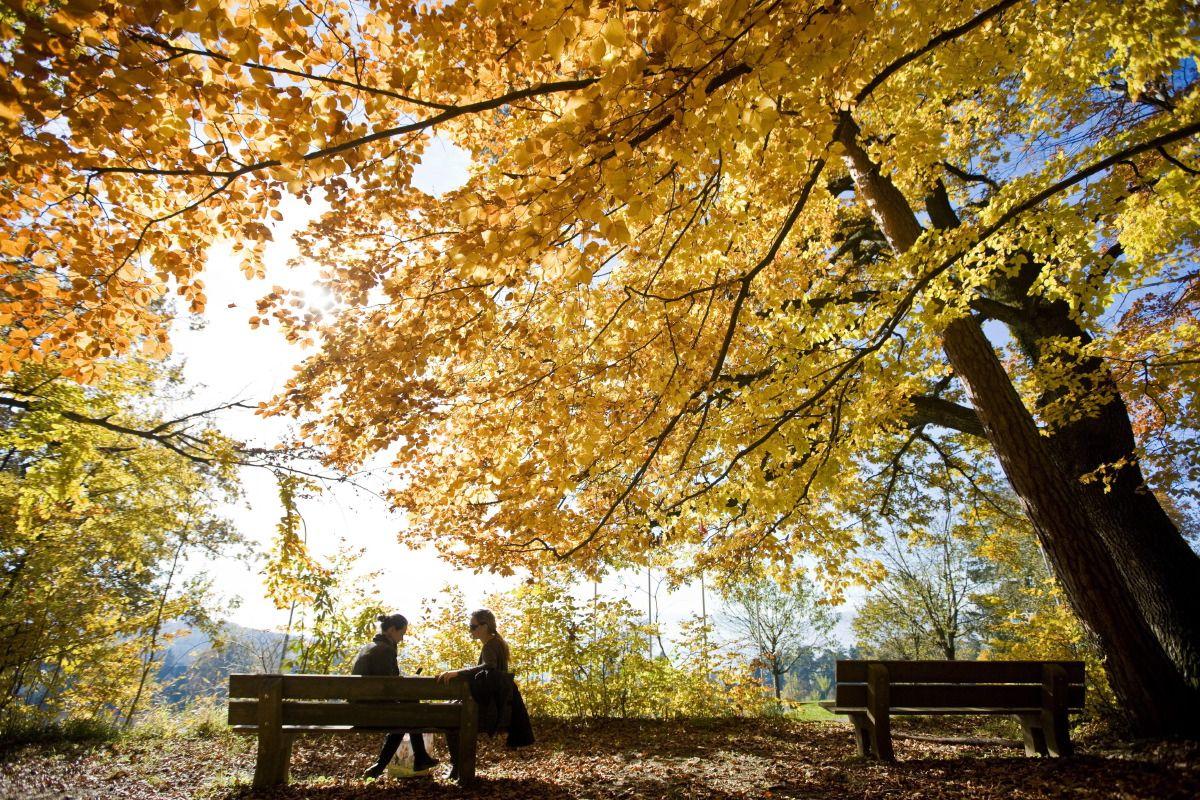 Two girls enjoy their lunchbreak on a bench in a colourful wood near Zurich, Switzerland, Friday, October 29. 2010. (KEYSTONE/Alessandro Della Bella)