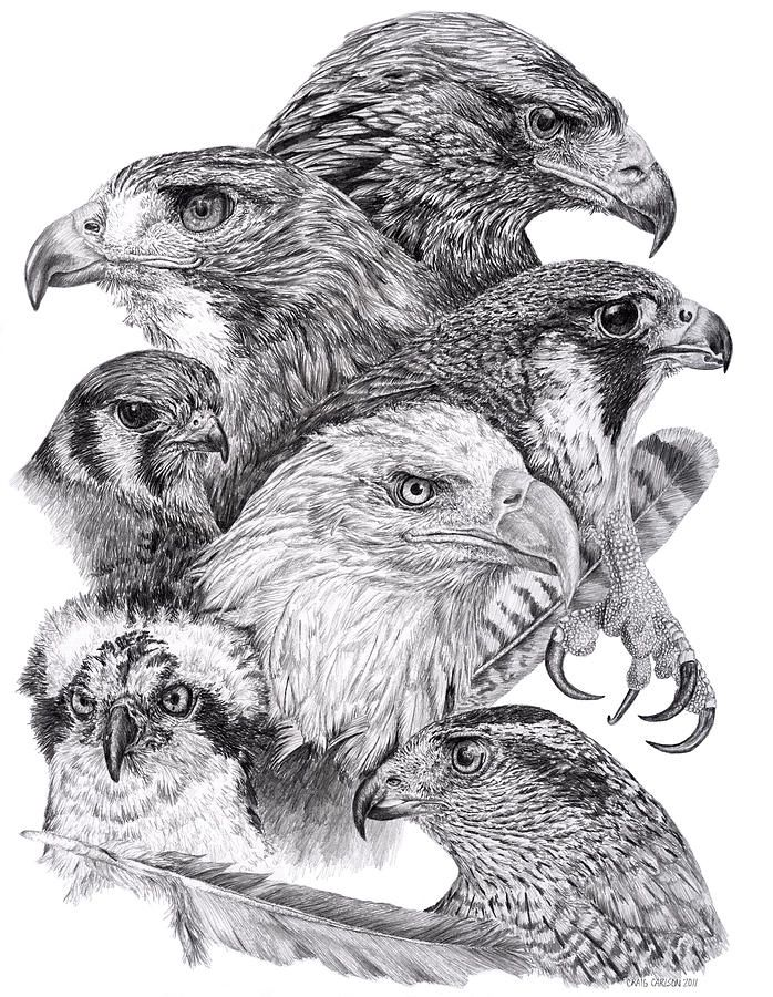 How to draw realistic birds google search · drawing drawingpencil