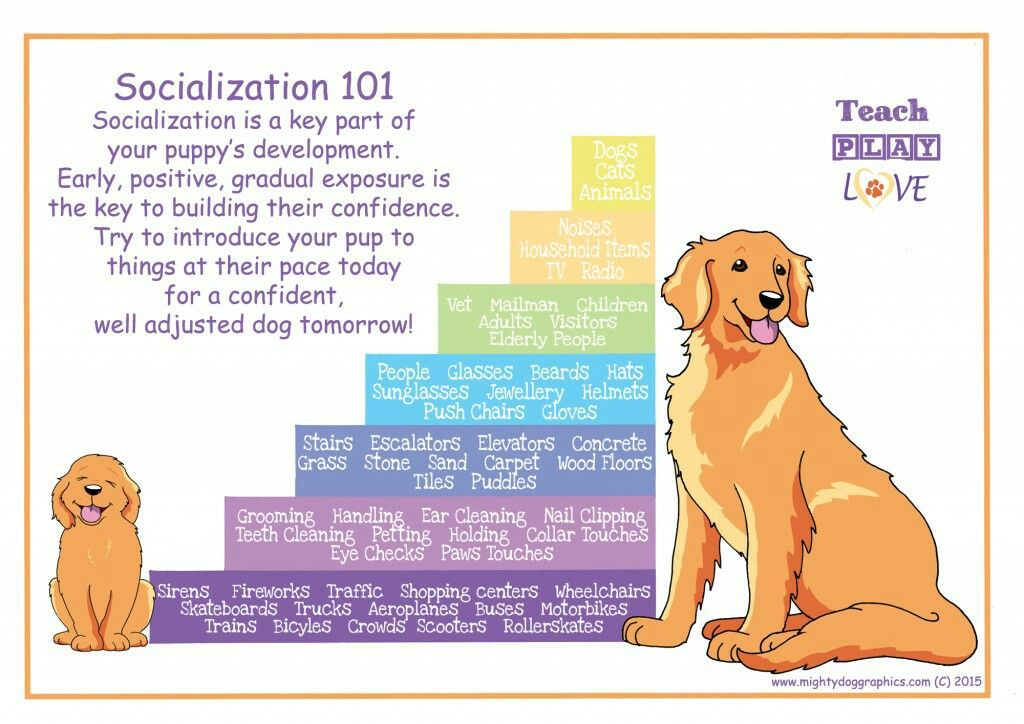 Are Puppy Socialization Classes Safe 2021
