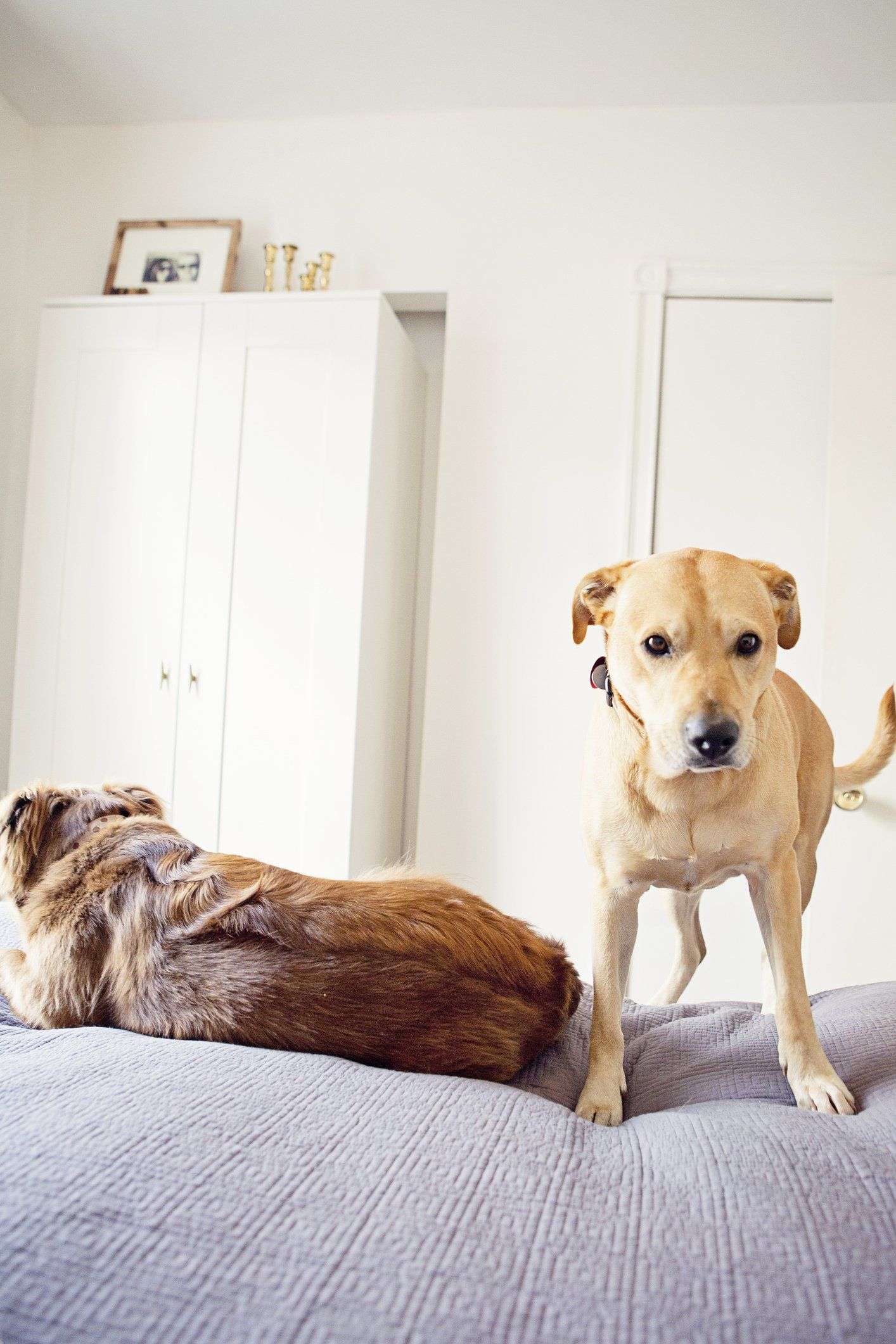 tips for settling pets into a new home life hacks perros list rh pinterest es