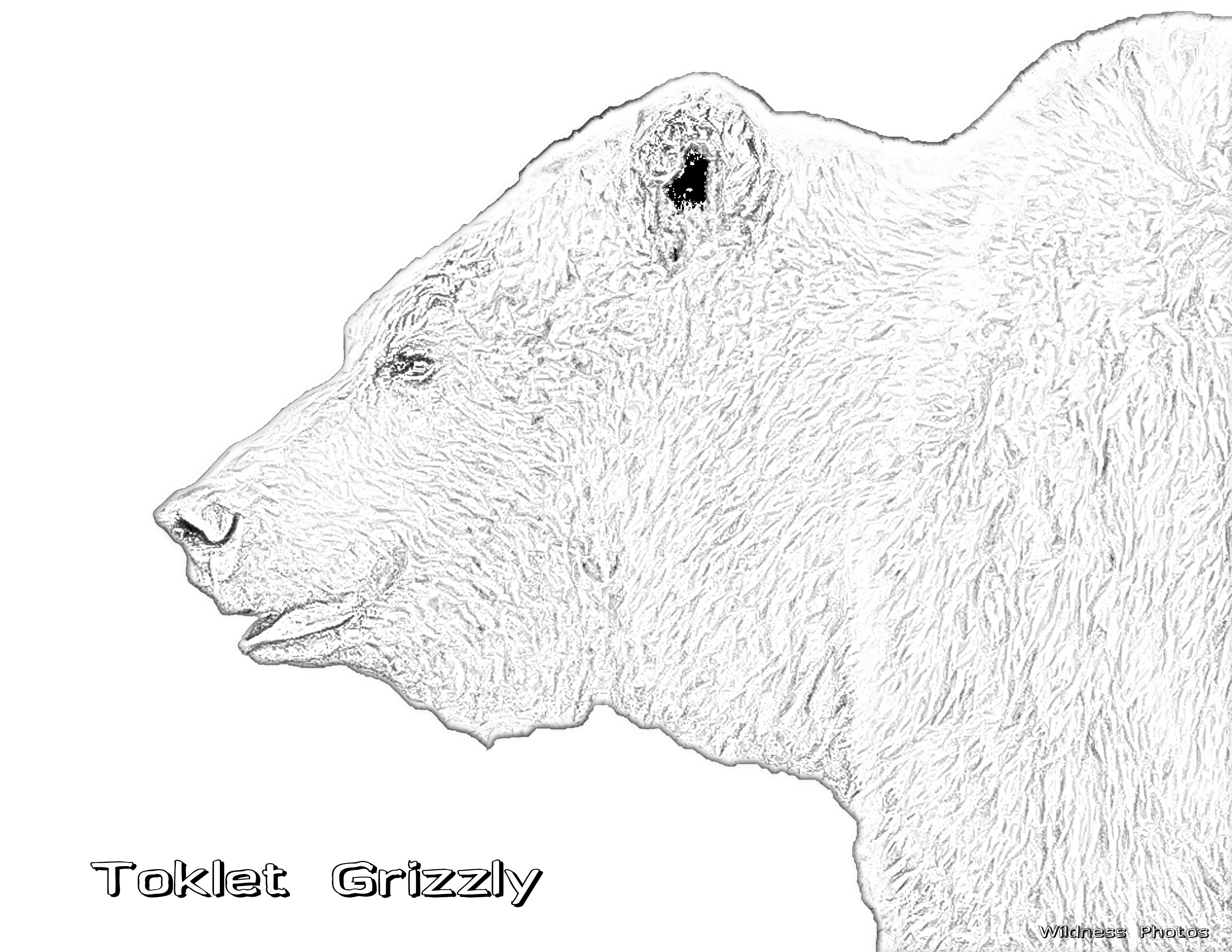 Toklet Grizzly 1