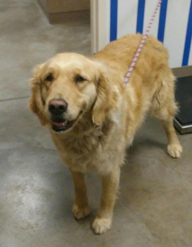 Adopt Mason On Animal Shelter Pet Dogs Animals