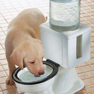 For Pets And A Long Weekend Toilet Water Dispenser Dog